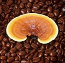 Ganoderma Coffee Benefits